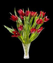 cut tulips bouquet in glass vase by Arletta Cwalina