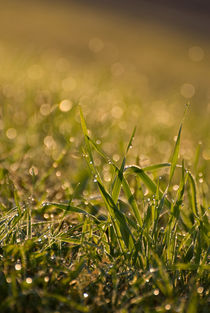Green fresh grass leaves by Arletta Cwalina