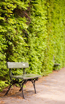 hedgerow and empty bench by Arletta Cwalina