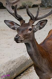 Deer-02
