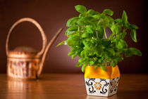 Ocimum basil plant in decorative flowerpot by Arletta Cwalina