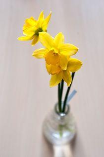 Yellow Daffodils von Maria Livia Chiorean