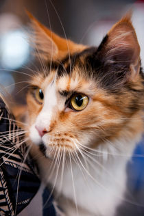Red hair cat at World Cat Show von Arletta Cwalina