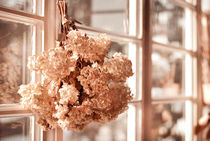hortensia old dried bouquet hang by Arletta Cwalina