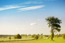 Rural grassland trees view by Arletta Cwalina