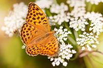 Argynnis paphia butterfly beauty by Arletta Cwalina