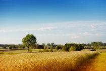 Rural wheat field view by Arletta Cwalina