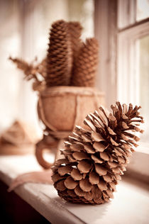 Large old dried cones on windowsill by Arletta Cwalina
