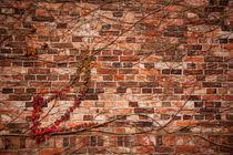 Red ivy hedge climber on wall von Arletta Cwalina
