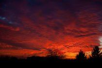 Twilight red sunset and trees silhouette  by Arletta Cwalina