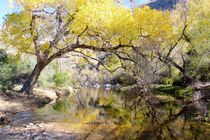 Sabino Canyon Creek by Kume Bryant