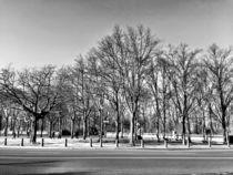 Garten in Winter von Ligia Fascioni