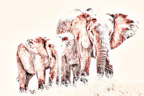 Edited-elephant-warming-filter