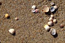 Muscheln am Strand von Jörg Hoffmann