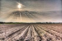 Angel Light Farm by David Pyatt