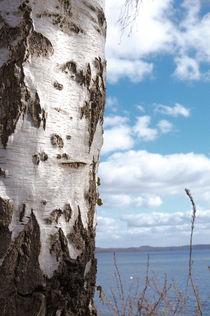 Birke am Plönsee von framboise