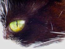 Cat's Eye by Sabine Cox