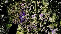 Schmetterlingswald von k1ngp1n