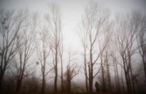 Bäume im Morgennebel  von Anke Franikowski