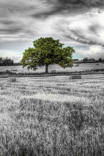 The solitary farm tree by David Pyatt
