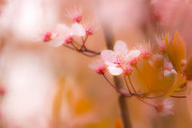 Frühlingsblüte im Norden by fraenks
