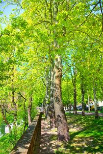 Ein frühlingshafter Park in Aschaffenburg by Gina Koch