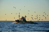 A Flock Of Gulls von Malcolm Snook
