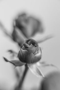 A black rose for your sweetheart...