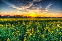 Early April Farm by David Pyatt