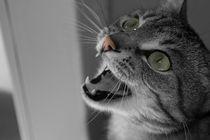 Schwarz-Weiße Katze mit Farbeffekten by beckert-design