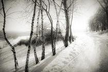 Waldrand by Dorit Fuhg