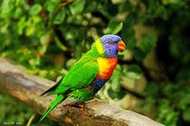 Vogelfrei und Farbenpracht von malin
