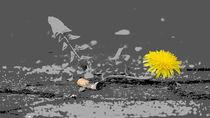 Bordsteinorchidee by Thomas Haas