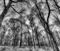 The Infared Forest by David Pyatt