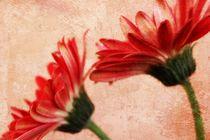 Red Texture 2 von Clare Bevan