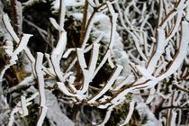 Winter Magic by mario-s