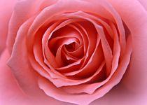 Pink Desire von Clare Bevan