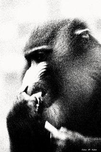 Der Primat, wild und mächtig! von malin