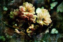 Flowering Cherry Texture von florin