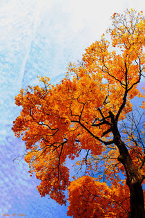 Herbstbaum by malin