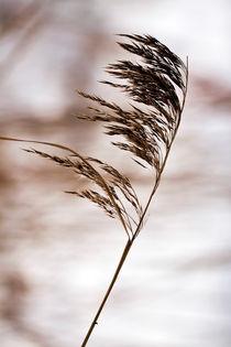 Gegen den Wind von Martina Marten