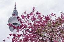 Hamburg im Frühling X von elbvue