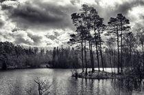 Daylight Dances on the Lake by Vicki Field