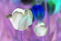 Tulips-negative-34