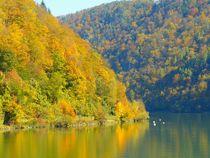 Herbst an der Donau in Oberösterreich by gscheffbuch