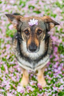 Hund im Frühling I by elbvue