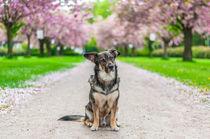 Hund im Frühling II by elbvue