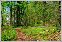 Flowered Path by constance lowery