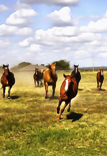 Das American Quarter Horse by Wolfgang Pfensig