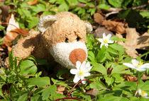 Blumenduft und Bärennase by Olga Sander